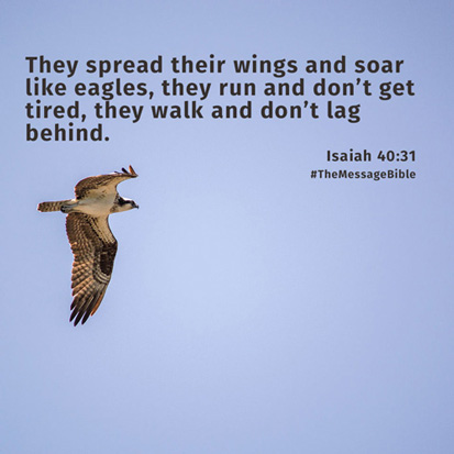 They spread their wings and soar like eagles