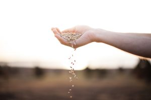 How to Plant Gardens in the Land of Unanswered Prayer